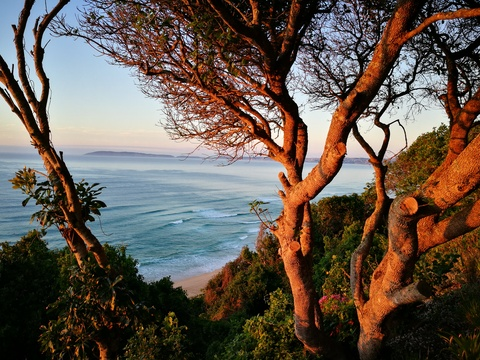 Keurbooms beach and Robberg Nature Reserve in Plettenberg Bay viewed from Gulls Way through the Milkwood trees
